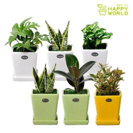 공기정화 식물 미니화분 사각 화이트화분 12종