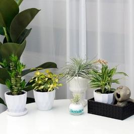 어반화분 아침향기 어반화분 공기정화 식물 모음전