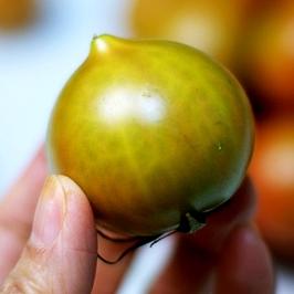 20년 부산 대저 짭짤이 토마토 1kg 중대과 외