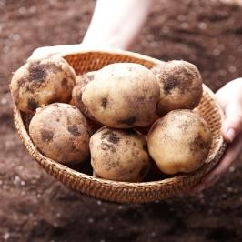 국내산 수미 감자 5kg 모음전 / 2개구매시 11.5kg 발송 ~_~