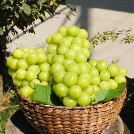 [어디까지팔아봤니] 설 선물세트 샤인머스켓, 사과, 배 대봉,둥시 반건시 곶감 등 과일 모음