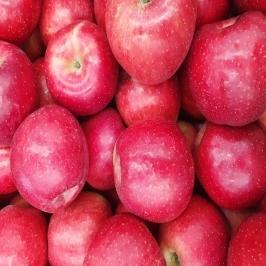 [위메프어워즈] 꿀 부사 사과10kg 중대과