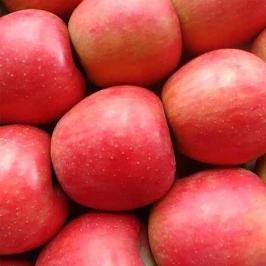 [투데이특가] 경북 청송 꿀 사과 8kg 가정용 소과/중대과/단감 +사과즙