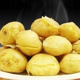 [게릴라특가] 19년산 포슬포슬 감자 5kg/10kg