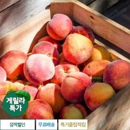 [게릴라특가] 2주만 먹을수있는 프리미엄 과일 고당도 신비복숭아 1kg