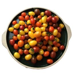 아맛 오색칼라 대추방울토마토 500g / 1kg(1+1)시+500g추가증정1.5kg