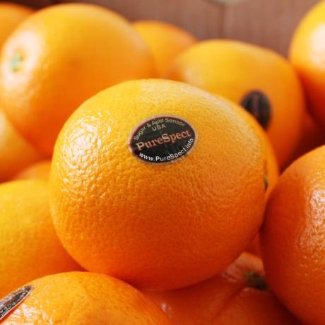 퓨어스펙 블랙라벨 오렌지 30과 (중소과)_게릴라