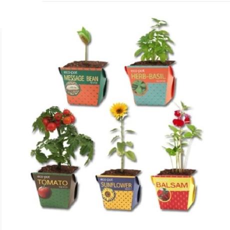 (멸치쇼핑) - 친환경 에코팟 식물키우기 5종 (방울토마토 봉선화 해바라기 바질 메시지콩)
