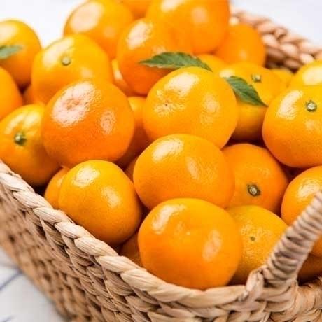 [싹쓸이딜]꿀당도 서귀포 조생 타이벡감귤 13kg ★ 한정수량 1만개 ★