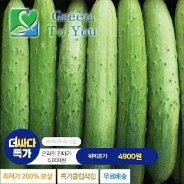 [더싸다특가] 국내산 백오이 (특) 2kg