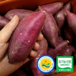 영암 국내산 토울 황금호박고구마 고구마 10kg