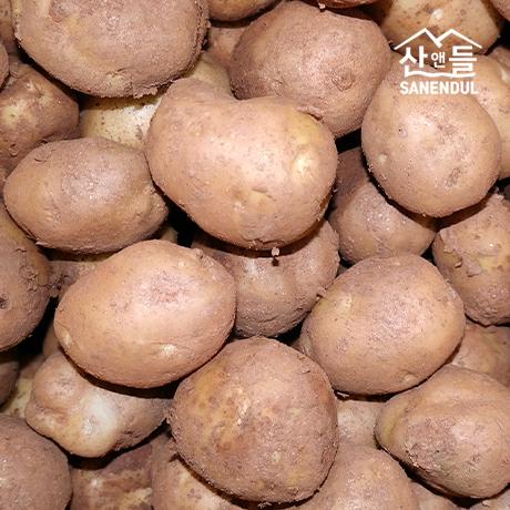 [산앤들]  황토 포슬포슬 산앤들 수미감자 10kg
