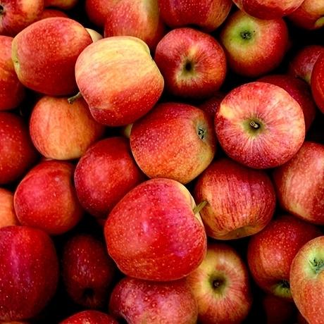 안동 햇 사과 1과 (한정수량 5만개)