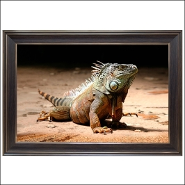C137-1/이구아나/대형액자/동물사진/동물그림/풍경화/풍경사진