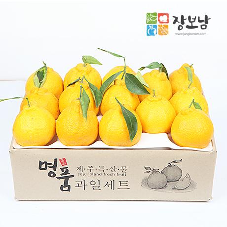 [갓신선] 제주 한라봉 실속형 3kg(14-17과)