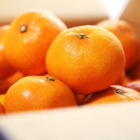 새콤달콤 조생감귤 5kg(소-중과랜덤과)