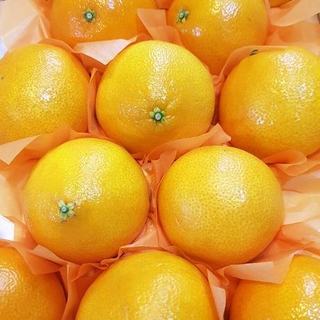 [싹쓸이딜] 명품 제주 황금향 1알