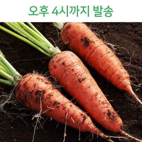 국내산 제주 흙당근 (상) 3kg내외