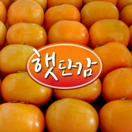 ★한정할인★ 진영 햇 단감 랜덤과 5kg