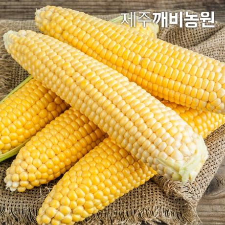 깨비농원 제주 초당옥수수 5개 상품(10-14cm내외)