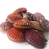 살아있는 싱싱함! 고성홍가리비 1kg