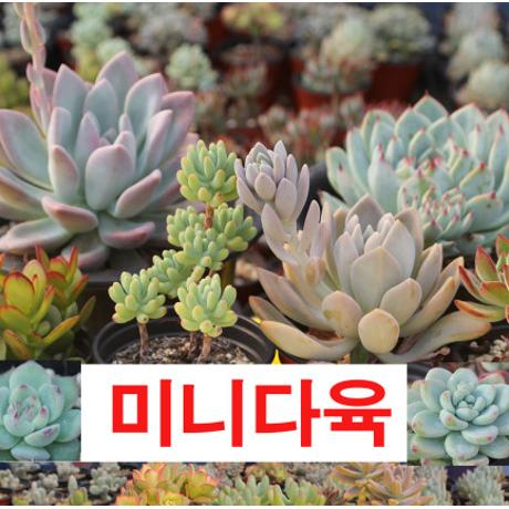 다육식물 51종 균일가 990원!