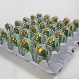 [텐바이텐] 계란한판이벤트DIY세트