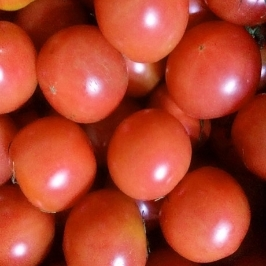 [더싸다특가] 찰토마토5kg